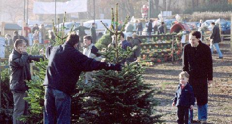 - Visit Christmas Tree Farm, Chesham, London, Christmas Trees UK