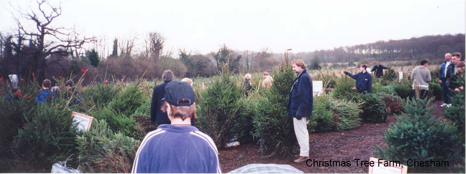 Christmas tree farm Chesham near London - fresh Xmas trees - direct from the grower - photograph