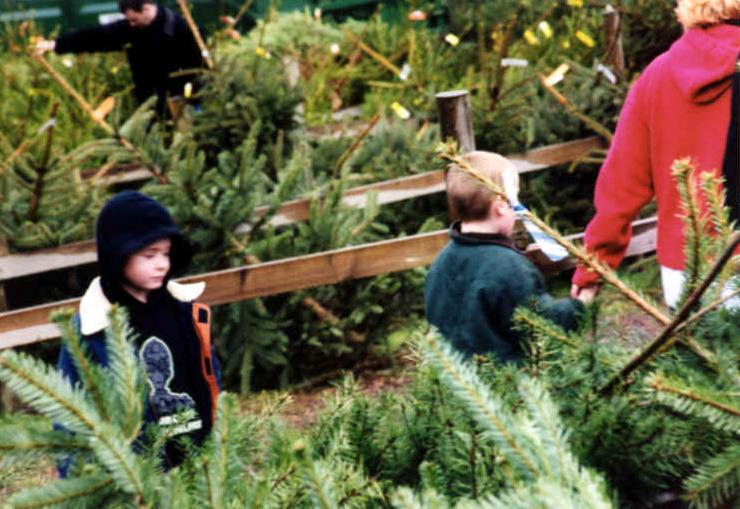 Children and a wide selection of Christmas trees - Christmas Tree Types - Christmas Tree Farm Chesham