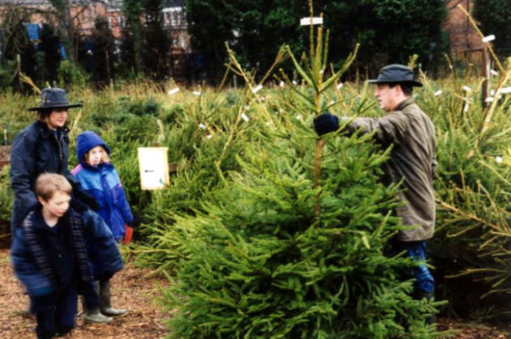 Family day Out at Christmas tree farm near Hemel Hempstead