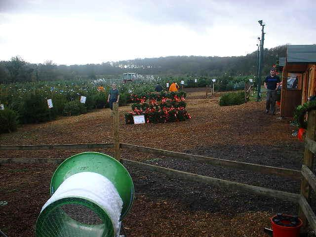 Visit Christmas Tree Farm, Chesham, London, Christmas Trees UK
