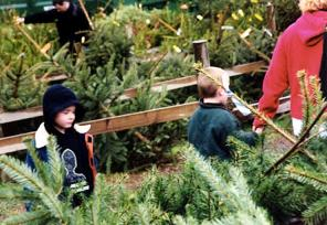 Children and a wide selection of Christmas trees
